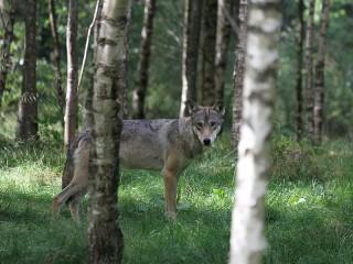Защита от диких животных в походе